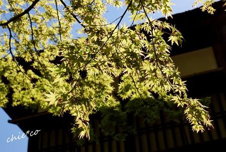 三渓園~春~-058