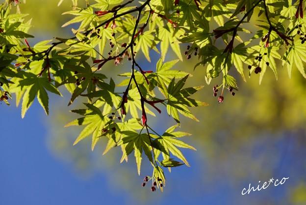 三渓園~春~-061