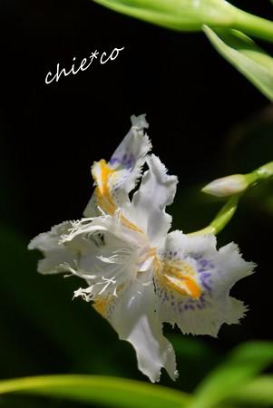 三渓園~春~-078