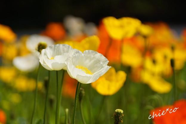 くりはま花の国-033