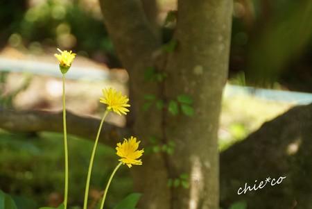 黄色の花・・