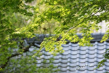 鎌倉-077