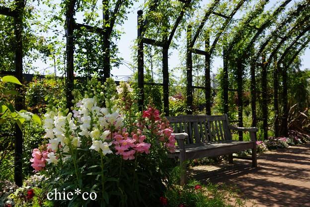 横浜 English Garden-064