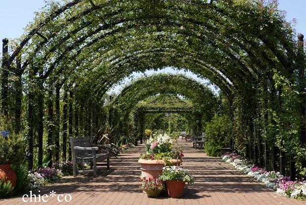 横浜 English Garden-002