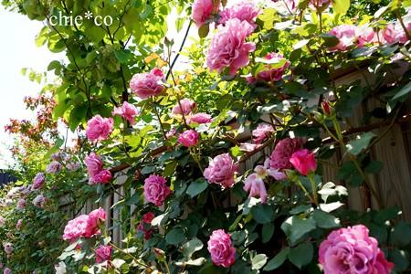横浜 English Garden-216