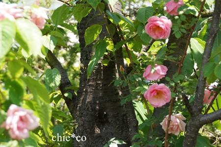 横浜 English Garden-229