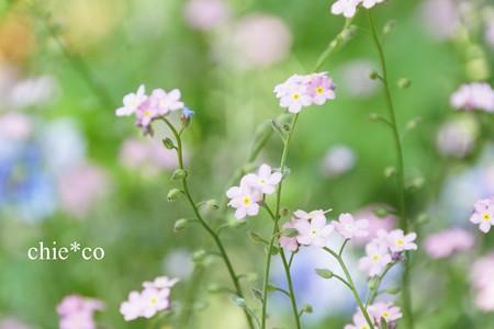 横浜 English Garden-238