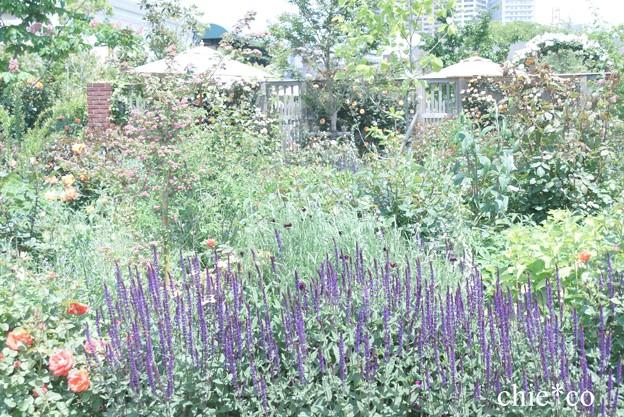 横浜 English Garden-359
