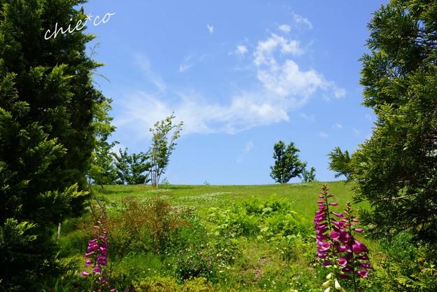 花菜ガーデン-067