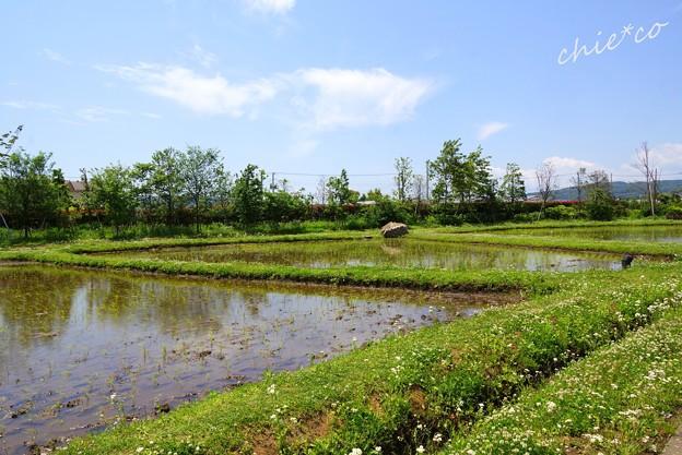 花菜ガーデン-102