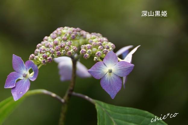 鎌倉長谷-211
