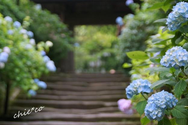 北鎌倉-035