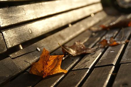 朝日の当たるベンチ・・・