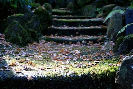 苔むして・・・落ち葉の階段