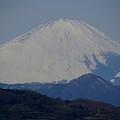 写真: 大きく見えた富士山 吾妻山公園にて・・