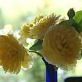 Photos: 雨の日は・・お花だけ室内へ非難します~