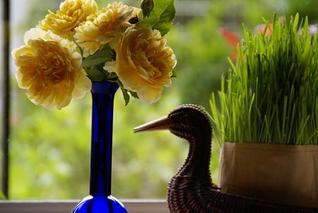 猫草と・・薔薇の花~♪