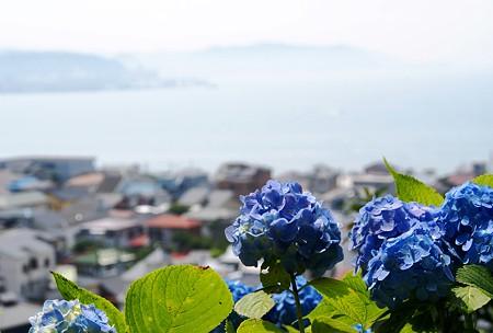 青の重なり・・ 紫陽花と海のある風景