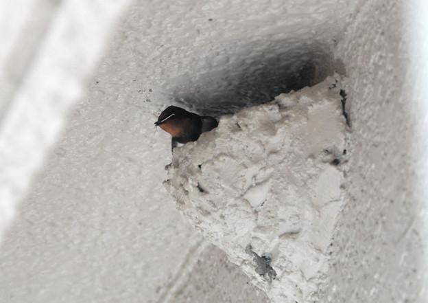 巣の中で巣材を
