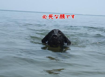 花初泳ぎ5