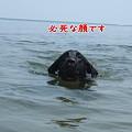 Photos: 花初泳ぎ5