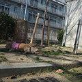 Photos: くるみ 091