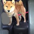 Photos: 車ではグロッキー・・・