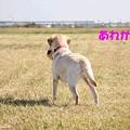 Photos: 待ち犬