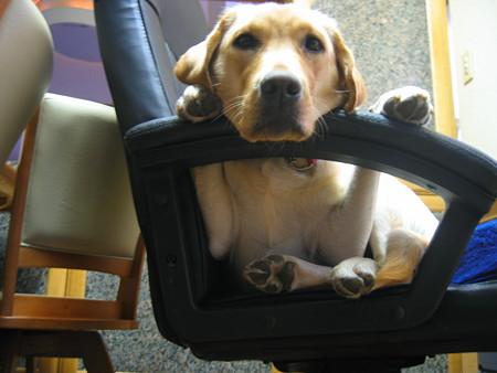 椅子に座る犬