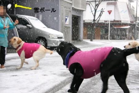 雪ボールをどうするか?