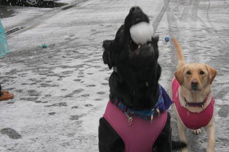 雪ボールキャッチ