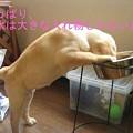 Photos: 背伸び~~