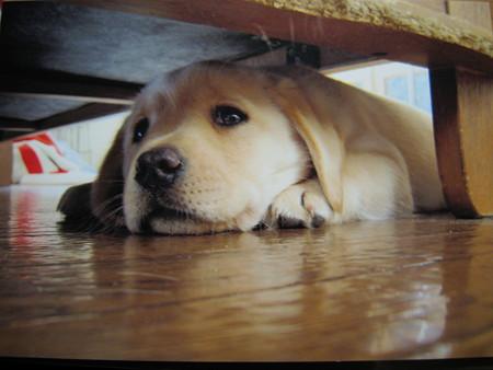 ソファーの下で・・・