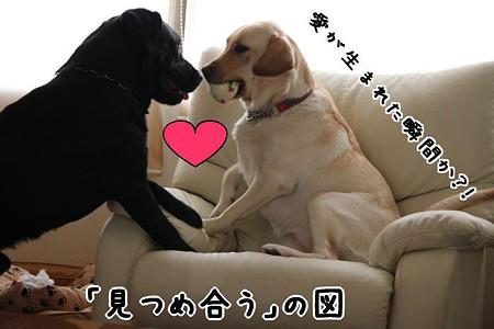 愛が生まれた?!