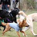 Photos: みんなで走るよ3