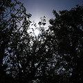 写真: この~木なんの木♪あこうの木