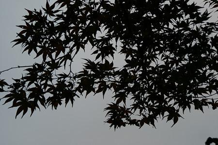 紅葉が待ち遠しい鎌倉1026k