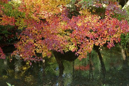 小雨の京都。鮮やかな紅葉の蓮華寺境内!
