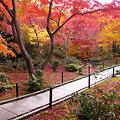 写真: 紅、橙、黄色と彩られた紅葉、宝匡院。