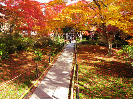 黄葉と紅葉が彩る、宝匡院。