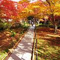 写真: 黄葉と紅葉が彩る、宝匡院。