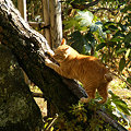 Photos: 木に登る猫1210b