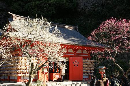 紅白の梅の競演0201a