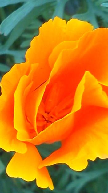 オレンジ・オレンジ♪1