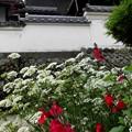 Photos: 古道と白壁の家・3