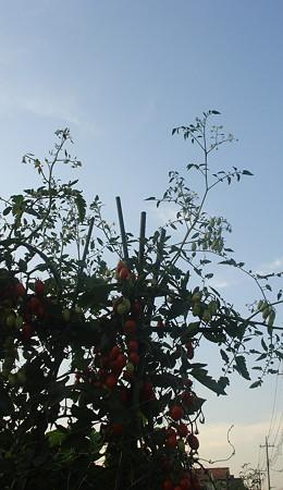 夕方の菜園1