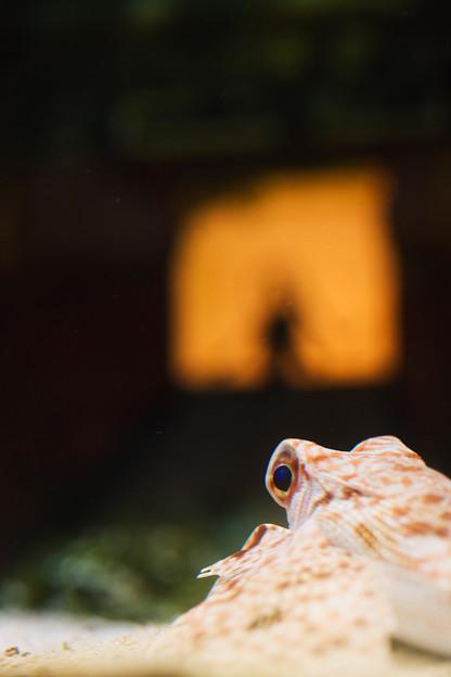 Photos: 竜宮城発見