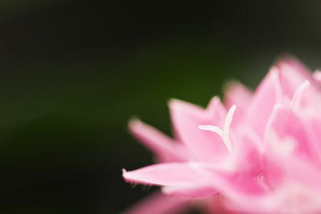 花の中のワイ