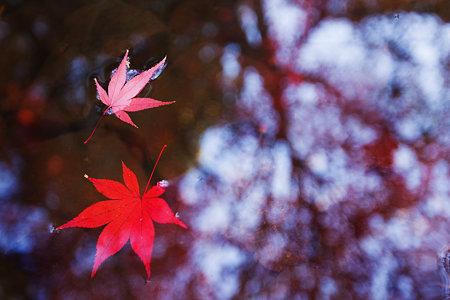 流れゆく秋