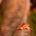 Photos: 雨と葉